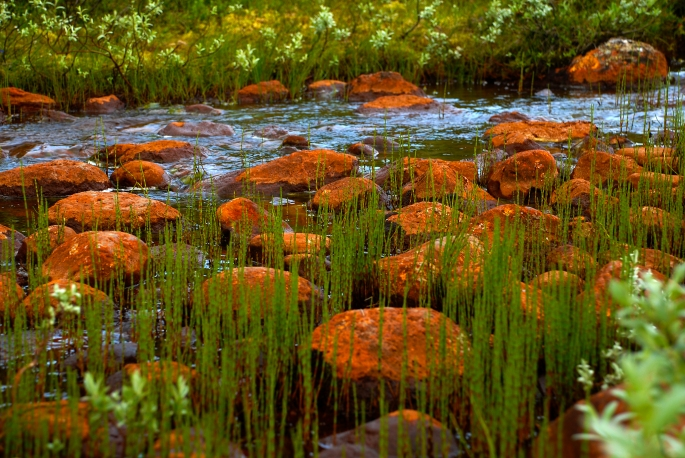 Stener og gress i elv