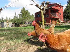 """Vi bodde i """"Rock Climbing House"""" i Arboli med egen buldrevegg og høner som sørget for frokosten"""