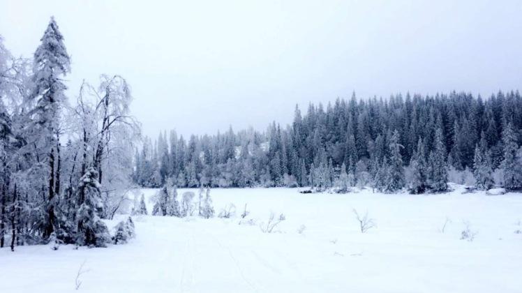 Nordmarka feb 17